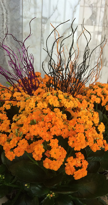 An image of Halloween-inspired blooming flowers