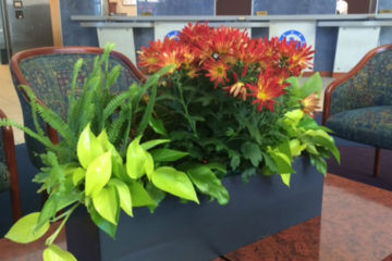An image of a small planter with flowers in a corporate setting