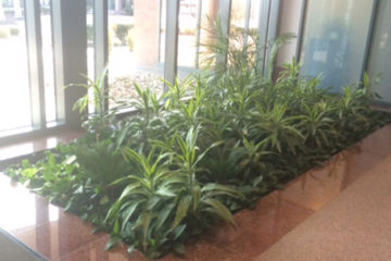 An image of a flower bed in a corporate lobby that was custom designed